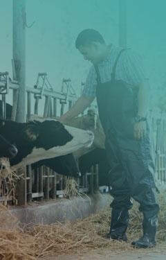 L'élevage et les viandes