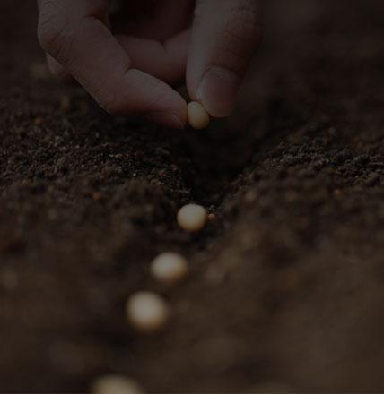 les semences agricoles