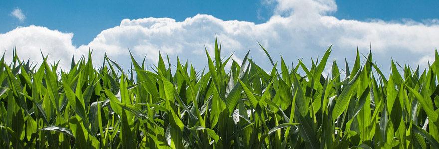 Les entreprises dédiées aux espaces verts et à l'agriculture